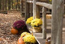 I love Fall / by Denenne Craig