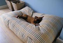 Honden / Een hondenpagina vol met informatie over: hondenmanden, voer, verzorging, hondenspeeltjes en kalenders http://info7388.wix.com/hondenpagina