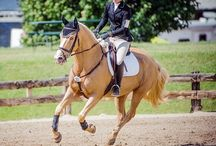 Horses and show jumping