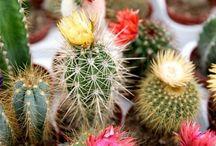 Enfermedades de cactus y suculentas / by Patricia Leighton