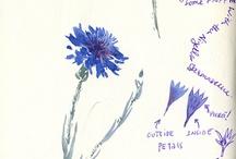 dessiner peindre fleurs