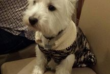 Roxies Onesies World / Dog clothes ,Blankets, Beds and Accessories
