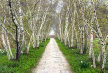 Træer og alleér