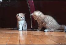 cats / cats, cats, cats