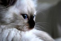 Soooo cute !!!!
