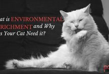What are the benefits of environmental Enrichment for cats and Dogs?