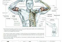 Anatomia do exercicio