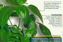 plantas medicinales!!