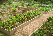 Get Gardening!  / Community gardening projects support healthy lifestyles, strengthen community bonds and connect people to nature. In 2013, Grow Your Park grants will fund 9 communities with the goal of donating fresh, community garden-grown produce to low-income families thanks to the Darden Foundation.