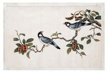 Chinese birds album / This album was created in 19th century probably especially for European judges of oriental arts though no evidence of its author and purpose was preserved.