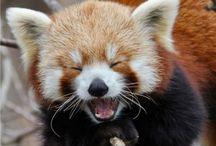 dyr der griner og smiler
