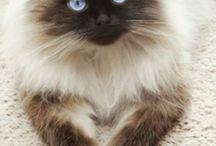 Cute Bibis...