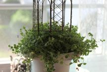 Plants in Decor