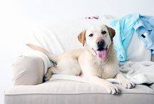 Pet Cleaning Tips / From pet hair removal to odor control, this board will provide great tips for cleaning up after your pet.