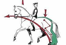 Лошади и верховая езда