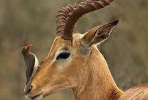 Animals' horns