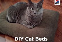 DIY / Why buy when you can DIY? There are plenty of great toys out there to buy, but with a little tape and clever thinking, your pet's new favorite plaything may be one you make!