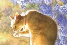 CAT / I love cats!!!