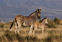 Things To Do / Suggestions of activities in South Africa