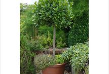 Ideas for large terracotta pots.