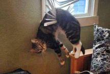 Funny Cat Photos