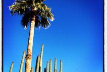 Desert walk / 2014 In Arizona