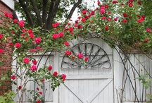 Doors, Windows, Fences, and Gates / Dutch, Screen, French
