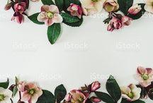 Spring Graphic Design
