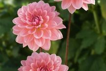 Ulubione kwiaty