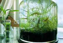 Fishes and plants! / Aquariums, fishes, plants, succulents, herbs, potteries, and glass jar gardens