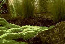 Травы в дизайне сада