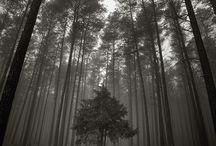 Photography / by Martha J Dameron Photography