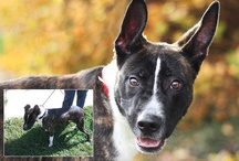 Before and Afters / The importance of good shelter pet photography really comes to light when you compare before and after pictures side by side.