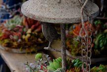 Home - Indoor Gardening