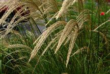 GR Plants palette