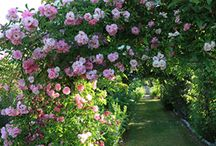Les Jardins de Roquelin (45)