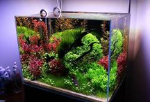Aquariums, terrariums, vivariums and other awesomeness