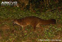 My Wonder Zoo  : Timon & Co / Meerkats, mongooses...