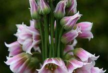 kvety pre záhon