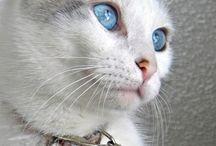 koty - cats