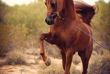 Όμορφα άλογα-Beautiful horses