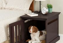 Pet Friendly Interiors