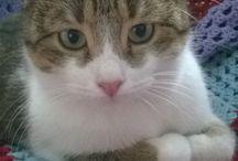 Cats / Pista & Barbucha