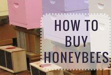 Bees / Everything Bee's. Beekeeping. New beekeeper. Garden.