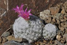 Spines, Oh My! All Things CACTI