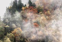 Beauty of the seasons