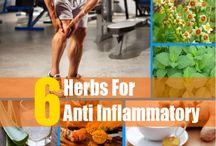 Helbredende urter / Healing Herbs