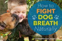 Doggie health care
