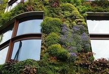 **jardines verticales ** / by Margarita Segura Garcia