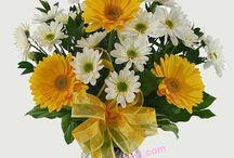 aydında çiçekçi - çiçek siparişi / Aydın Çiçek Evi - 0256 614 84 88 http://aydincicekevi.com                                Çiçek siparişleriniz için sitemizi ziyaret ediniz.Telefon veya sitemiz aracılığı ile sipariş verebilirsiniz.Merkezde ve ilçelerde dükkanlarımız bulunmaktadır.Aynı gün teslim edilir.online çiçekçiniz
